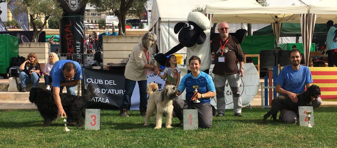 agility gos d'atura catala festa dels súpers 2016
